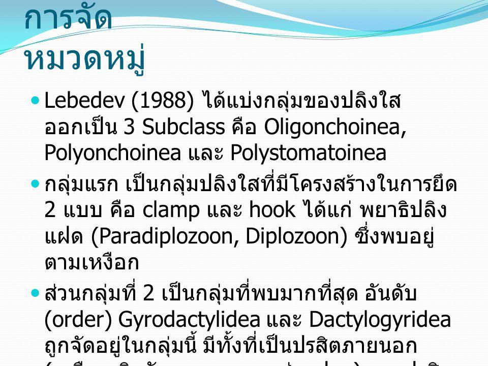 การจัด หมวดหมู่ Lebedev (1988) ได้แบ่งกลุ่มของปลิงใส ออกเป็น 3 Subclass คือ Oligonchoinea, Polyonchoinea และ Polystomatoinea กลุ่มแรก เป็นกลุ่มปลิงใสที่มีโครงสร้างในการยึด 2 แบบ คือ clamp และ hook ได้แก่ พยาธิปลิง แฝด (Paradiplozoon, Diplozoon) ซึ่งพบอยู่ ตามเหงือก ส่วนกลุ่มที่ 2 เป็นกลุ่มที่พบมากที่สุด อันดับ (order) Gyrodactylidea และ Dactylogyridea ถูกจัดอยู่ในกลุ่มนี้ มีทั้งที่เป็นปรสิตภายนอก ( เหงือก ผิวตัว รูทวาร, ตา, ช่องปาก ) และปรสิต ภายใน ( ทางเดินอาหาร, อวัยวะสืบพันธุ, หัวใจ ) กลุ่มนี้มี hooks และ anchors เป็นโครงสร้าง สำหรับยึดเกาะ