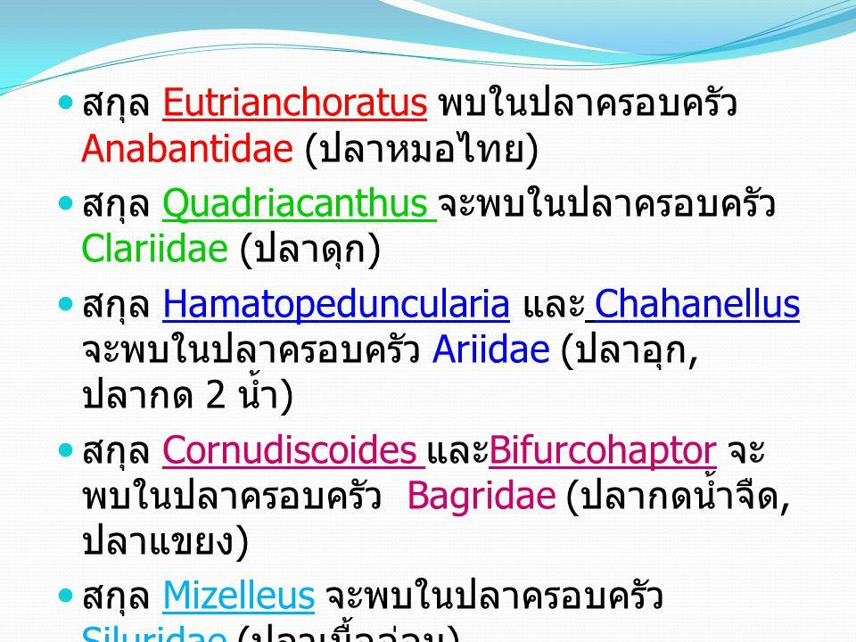 สกุล Eutrianchoratus พบในปลาครอบครัว Anabantidae ( ปลาหมอไทย ) สกุล Quadriacanthus จะพบในปลาครอบครัว Clariidae ( ปลาดุก ) สกุล Hamatopeduncularia และ Chahanellus จะพบในปลาครอบครัว Ariidae ( ปลาอุก, ปลากด 2 น้ำ ) สกุล Cornudiscoides และ Bifurcohaptor จะ พบในปลาครอบครัว Bagridae ( ปลากดน้ำจืด, ปลาแขยง ) สกุล Mizelleus จะพบในปลาครอบครัว Siluridae ( ปลาเนื้ออ่อน )