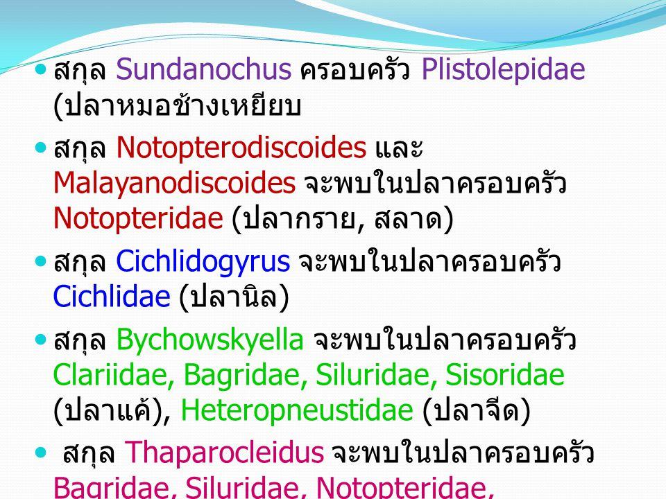 สกุล Sundanochus ครอบครัว Plistolepidae ( ปลาหมอช้างเหยียบ สกุล Notopterodiscoides และ Malayanodiscoides จะพบในปลาครอบครัว Notopteridae ( ปลากราย, สลาด ) สกุล Cichlidogyrus จะพบในปลาครอบครัว Cichlidae ( ปลานิล ) สกุล Bychowskyella จะพบในปลาครอบครัว Clariidae, Bagridae, Siluridae, Sisoridae ( ปลาแค้ ), Heteropneustidae ( ปลาจีด ) สกุล Thaparocleidus จะพบในปลาครอบครัว Bagridae, Siluridae, Notopteridae, Sisoridae ( ปลาแค้ ), Schilbeidae ( ปลา สังกะวาด ), Pangasiidae ( ปลาสวาย )