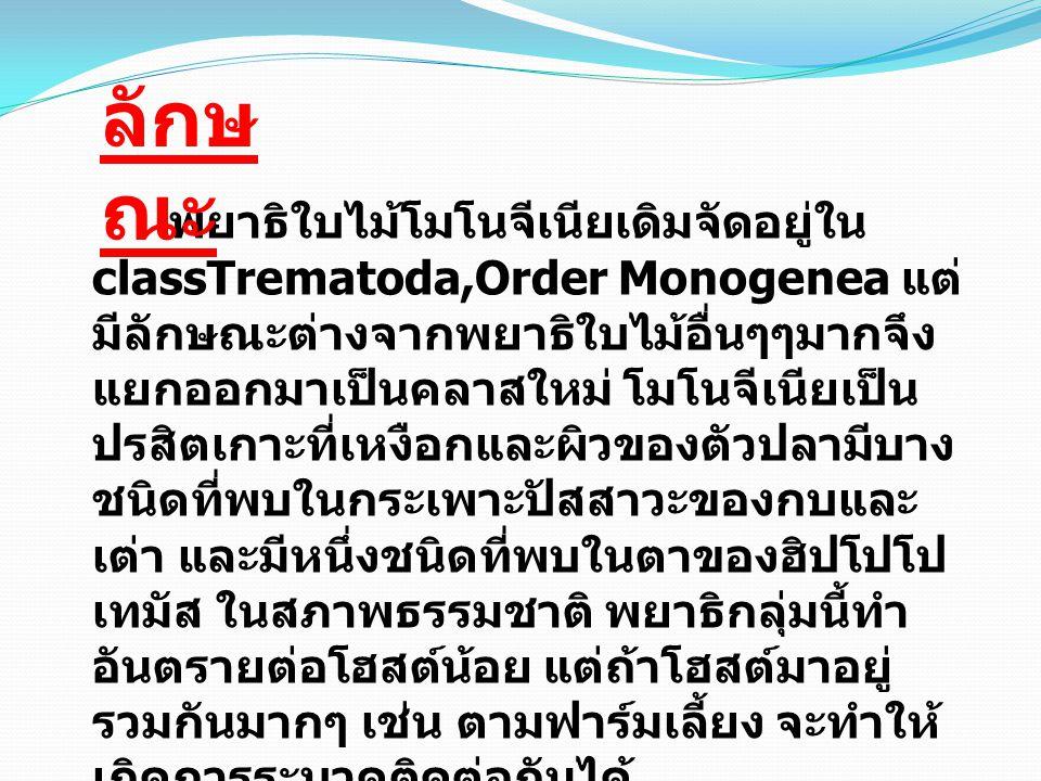 พยาธิใบไม้โมโนจีเนียเดิมจัดอยู่ใน classTrematoda,Order Monogenea แต่ มีลักษณะต่างจากพยาธิใบไม้อื่นๆๆมากจึง แยกออกมาเป็นคลาสใหม่ โมโนจีเนียเป็น ปรสิตเกาะที่เหงือกและผิวของตัวปลามีบาง ชนิดที่พบในกระเพาะปัสสาวะของกบและ เต่า และมีหนึ่งชนิดที่พบในตาของฮิปโปโป เทมัส ในสภาพธรรมชาติ พยาธิกลุ่มนี้ทำ อันตรายต่อโฮสต์น้อย แต่ถ้าโฮสต์มาอยู่ รวมกันมากๆ เช่น ตามฟาร์มเลี้ยง จะทำให้ เกิดการระบาดติดต่อกันได้ ลักษ ณะ