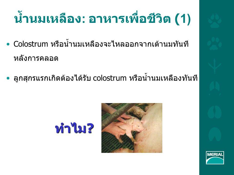 LA unit Thailand จะจัดการน้ำนมเหลืองอย่าง เหมาะสมได้อย่างไร (3) จัดการด้านโภชนาการ อาหารที่เหมาะสมในช่วง อุ้มท้องและช่วงให้นม