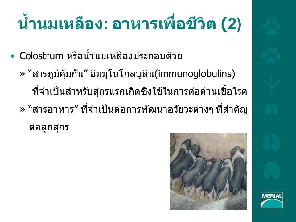 LA unit Thailand จะจัดการน้ำนมเหลืองอย่าง เหมาะสมได้อย่างไร (4) ตรวจสอบให้แน่ใจว่าแม่สุกรทุกตัวได้รับน้ำสะอาดอย่าง เพียงพอตลอดเวลา (ไม่ให้แม่สุกรท้องผูก) ปริมาณการไหลของน้ำในแม่สุกรอุ้มท้อง / แม่เลี้ยงลูก ต้องมากกว่า 1,500 มิลลิลิตรต่อนาที