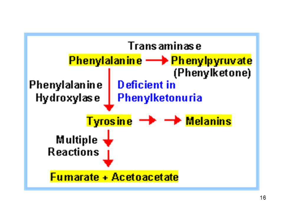 17 Aromatic Amino Acid Utilization in Plants Phenylalanine และ tyrosine ทำหน้าที่เป็นสาร ตั้งต้นในการสังเคราะห์สารต่าง ๆ มากมายใน พืช - Lignin - Tannins - Pigment: flavonoids, anthocyanins - Flavor components of spices - Opiates : morphine - Plant growth hormones: auxin