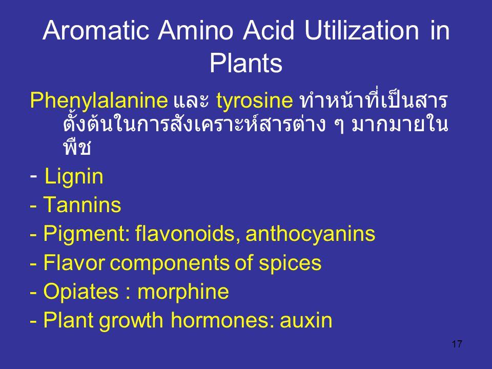 17 Aromatic Amino Acid Utilization in Plants Phenylalanine และ tyrosine ทำหน้าที่เป็นสาร ตั้งต้นในการสังเคราะห์สารต่าง ๆ มากมายใน พืช - Lignin - Tanni