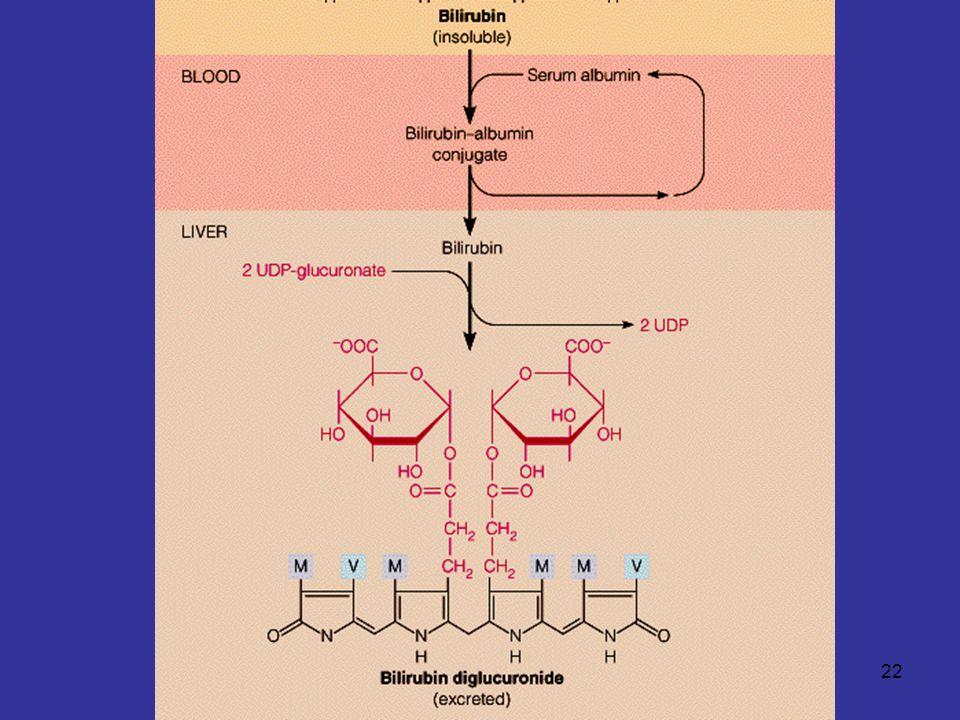 23 Amino acid biosynthesis กรดแอมิโนทุกชนิดสามารถสังเคราะห์ได้จากสาร ตัวกลางในกระบวนการ glycolysis, pentose phosphate pathway หรือ citric acid cycle -Glutamate, aspartate และ alanine ได้จาก การ transamination ของ  -ketoglutarate, oxaloacetate และ pyruvate ตามลำดับ -Glutamine และ asparagine สร้างจาก glutamate และ aspartate ตามลำดับ