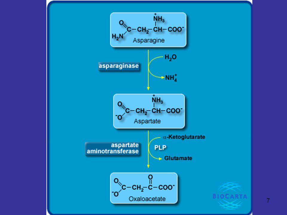 8 Pathways of Amino Acid Degradation Glucogenic (3)  -Ketoglutarate Family - โครงคาร์บอนของ arginine, glutamine, histidine และ proline จะถูกย่อยเป็น  - ketoglutarate ผ่านทาง glutamate