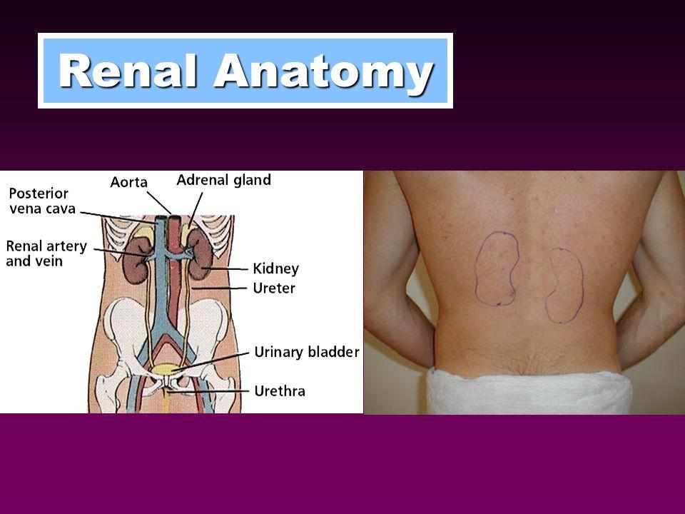 ARF (Acute Renal Failure) – ↓ Renal function in hours to days CRF (Chronic Renal Failure) – ↓ Renal function in > 3 months RENAL FAILURE CKD (Chronic Kidney Disease) AKI (Acute Kidney Injury)