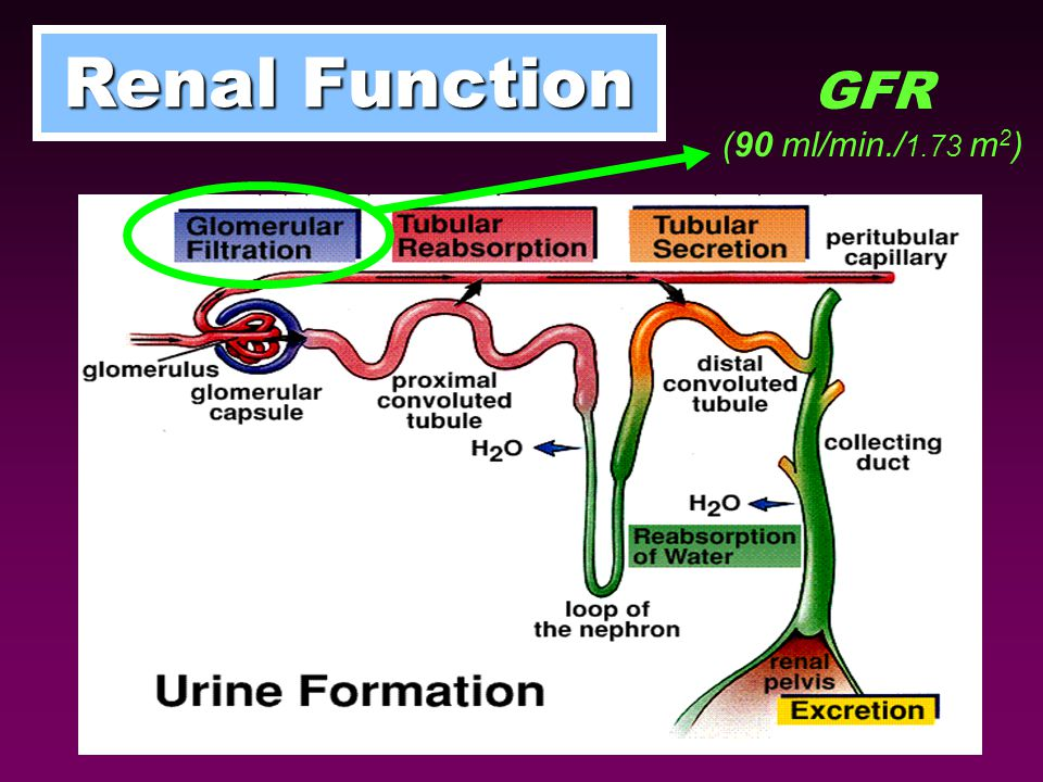 GFR (90 ml/min./ 1.73 m 2 )