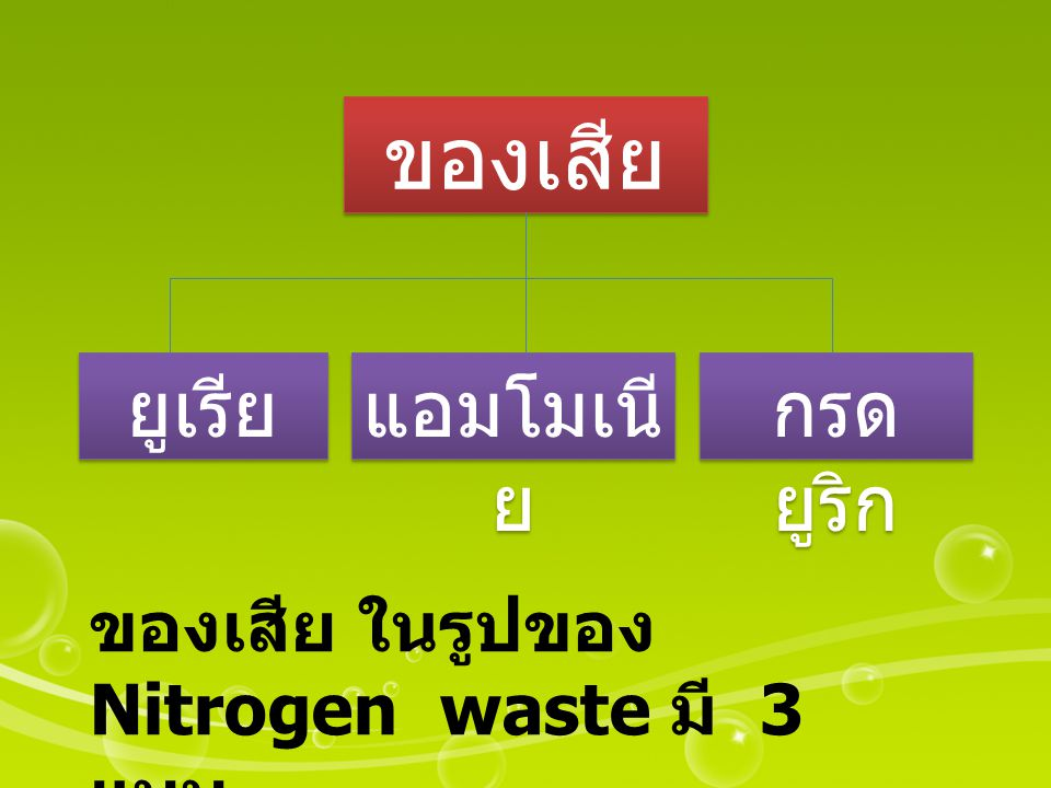 ของเสีย ยูเรีย แอมโมเนี ย กรด ยูริก ของเสีย ในรูปของ Nitrogen waste มี 3 แบบ