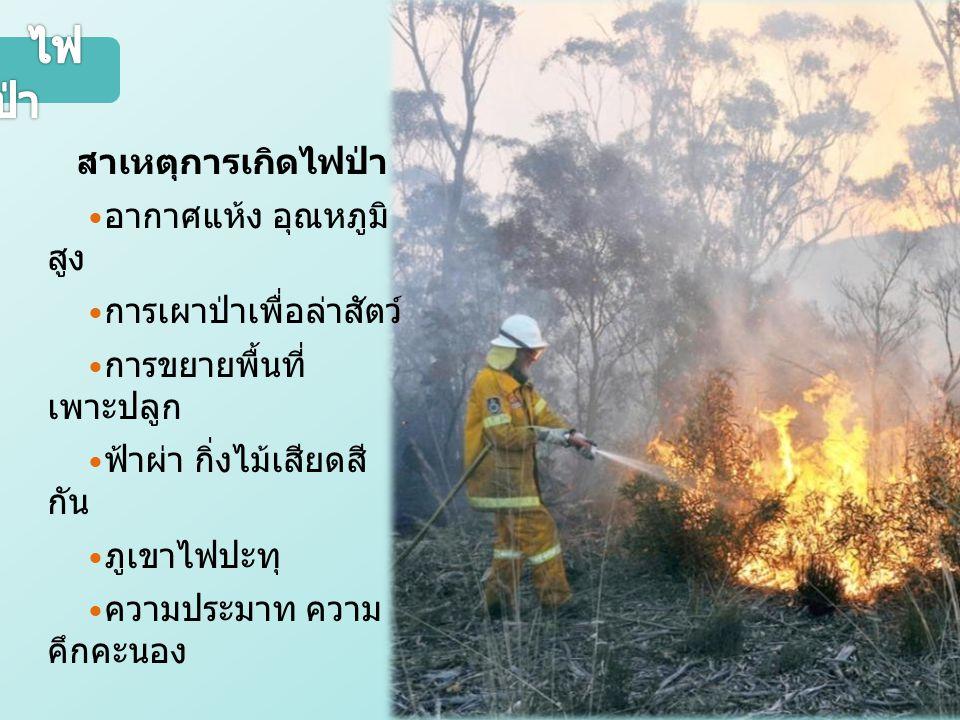 สาเหตุการเกิดไฟป่า อากาศแห้ง อุณหภูมิ สูง การเผาป่าเพื่อล่าสัตว์ การขยายพื้นที่ เพาะปลูก ฟ้าผ่า กิ่งไม้เสียดสี กัน ภูเขาไฟปะทุ ความประมาท ความ คึกคะนอง