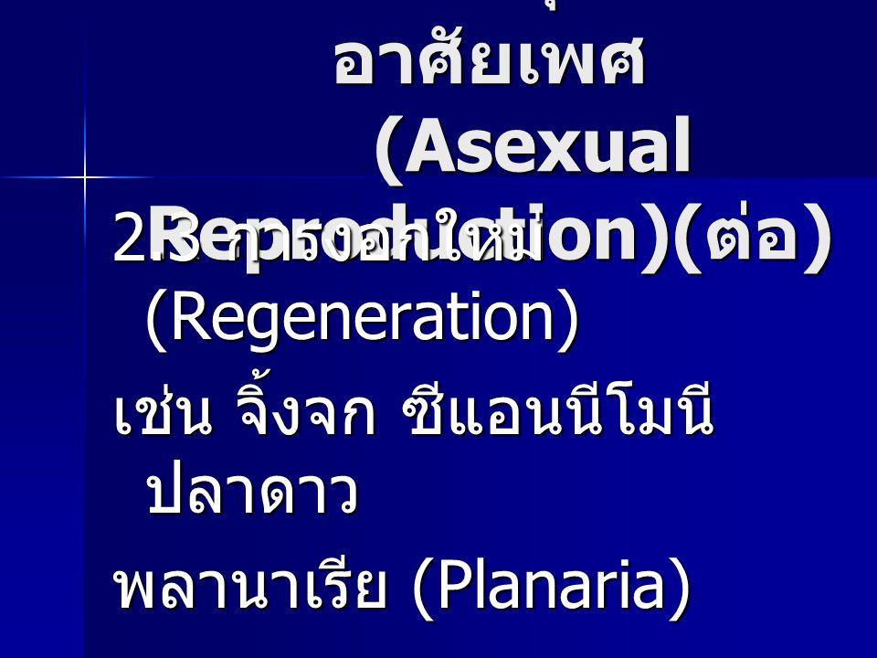 การสืบพันธุ์แบบไม่ อาศัยเพศ (Asexual Reproduction)( ต่อ ) 2.3 การงอกใหม่ (Regeneration) เช่น จิ้งจก ซีแอนนีโมนี ปลาดาว พลานาเรีย (Planaria)