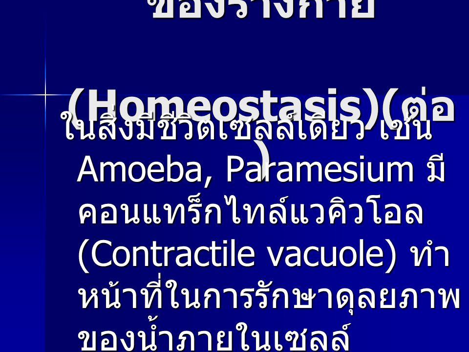 การรักษาดุลยภาพ ของร่างกาย (Homeostasis)( ต่อ ) ในสิ่งมีชีวิตเซลล์เดียว เช่น Amoeba, Paramesium มี คอนแทร็กไทล์แวคิวโอล (Contractile vacuole) ทำ หน้าท