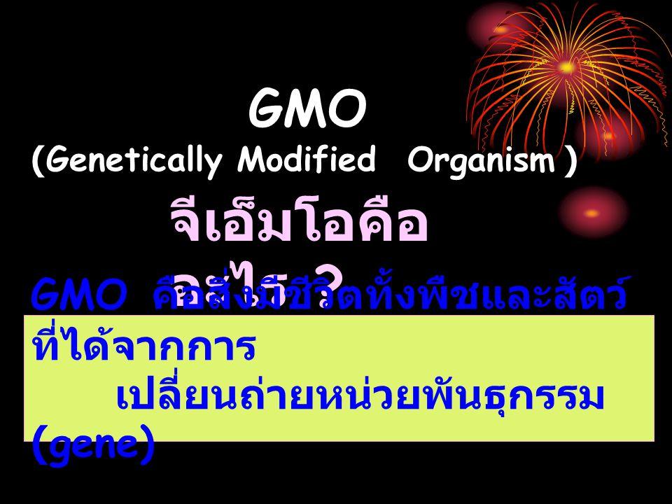 GMO (Genetically Modified Organism ) จีเอ็มโอคือ อะไร .
