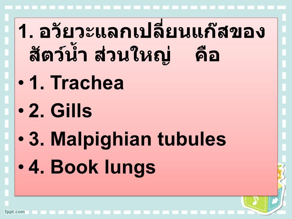 1. อวัยวะแลกเปลี่ยนแก๊สของ สัตว์น้ำ ส่วนใหญ่ คือ 1. Trachea 2. Gills 3. Malpighian tubules 4. Book lungs 1. อวัยวะแลกเปลี่ยนแก๊สของ สัตว์น้ำ ส่วนใหญ่