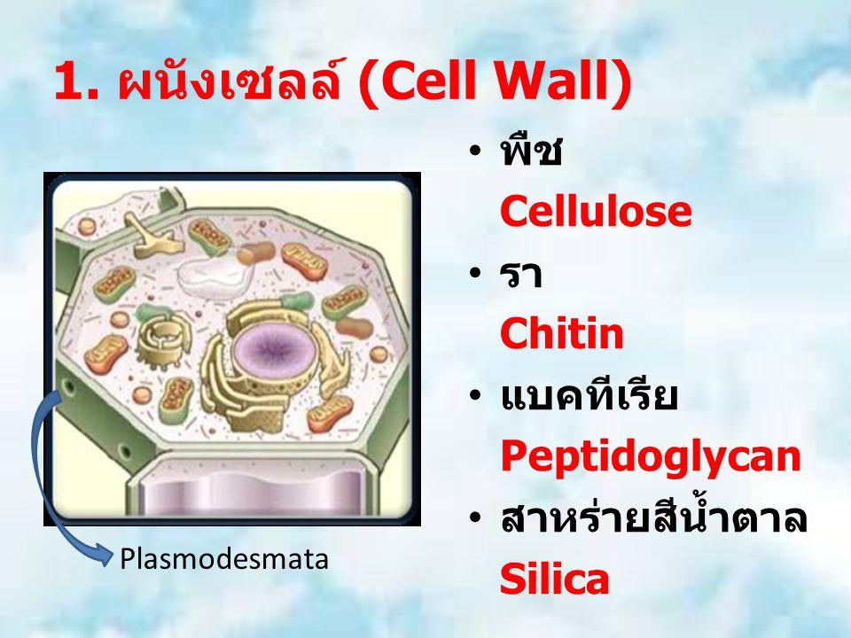 1. ผนังเซลล์ (Cell Wall) พืช Cellulose รา Chitin แบคทีเรีย Peptidoglycan สาหร่ายสีน้ำตาล Silica Plasmodesmata