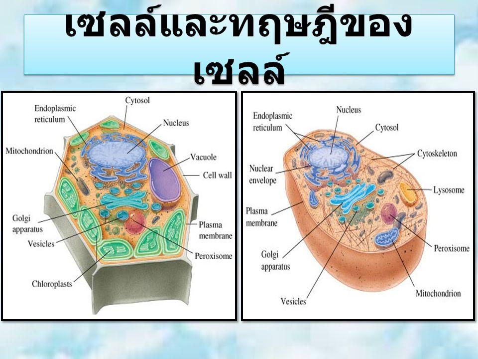 เซลล์และทฤษฎีของ เซลล์