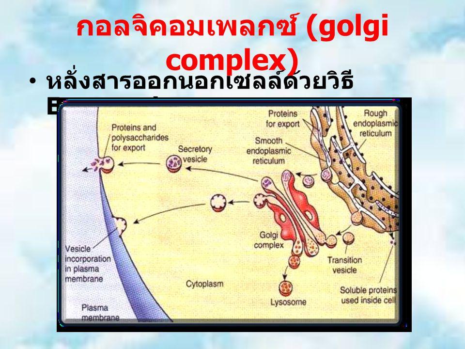 หลั่งสารออกนอกเซลล์ด้วยวิธี Exocytosis กอลจิคอมเพลกซ์ (golgi complex)