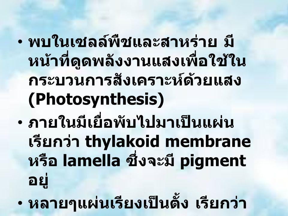 พบในเซลล์พืชและสาหร่าย มี หน้าที่ดูดพลังงานแสงเพื่อใช้ใน กระบวนการสังเคราะห์ด้วยแสง (Photosynthesis) ภายในมีเยื่อพับไปมาเป็นแผ่น เรียกว่า thylakoid membrane หรือ lamella ซึ่งจะมี pigment อยู่ หลายๆแผ่นเรียงเป็นตั้ง เรียกว่า granum หลายๆ granum เรียกว่า grana ของเหลวภายในเรียกว่า stroma