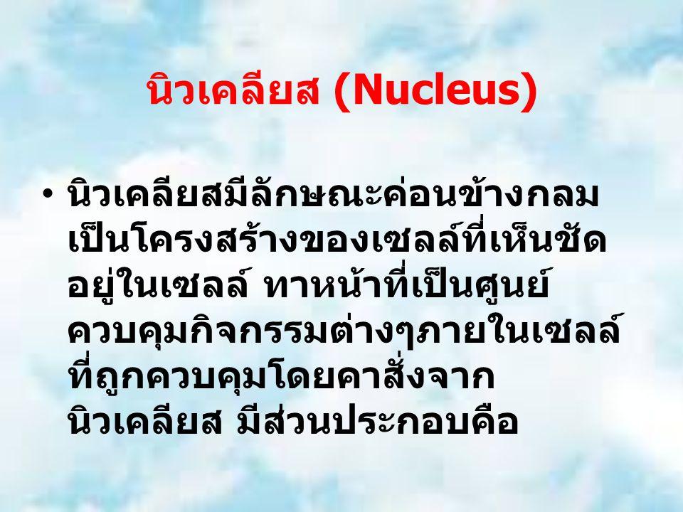 นิวเคลียส (Nucleus) นิวเคลียสมีลักษณะค่อนข้างกลม เป็นโครงสร้างของเซลล์ที่เห็นชัด อยู่ในเซลล์ ทาหน้าที่เป็นศูนย์ ควบคุมกิจกรรมต่างๆภายในเซลล์ ที่ถูกควบคุมโดยคาสั่งจาก นิวเคลียส มีส่วนประกอบคือ