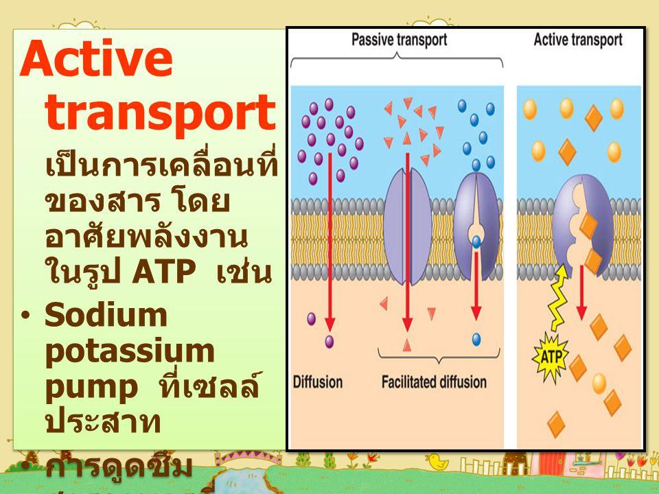 Active transport เป็นการเคลื่อนที่ ของสาร โดย อาศัยพลังงาน ในรูป ATP เช่น Sodium potassium pump ที่เซลล์ ประสาท การดูดซึม สารอาหารที่ ลำไส้เล็ก การดูดสารกลับ ที่หน่วยไต การดูดแร่ธาตุที่ รากพืช Active transport เป็นการเคลื่อนที่ ของสาร โดย อาศัยพลังงาน ในรูป ATP เช่น Sodium potassium pump ที่เซลล์ ประสาท การดูดซึม สารอาหารที่ ลำไส้เล็ก การดูดสารกลับ ที่หน่วยไต การดูดแร่ธาตุที่ รากพืช