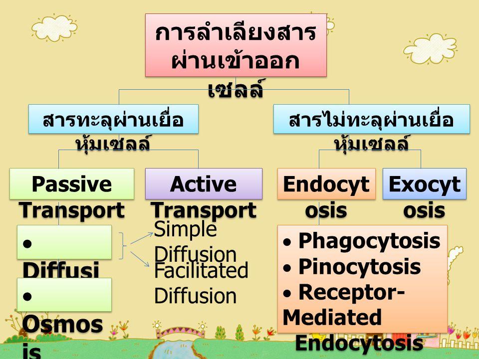 การลำเลียงสาร ผ่านเข้าออก เซลล์ สารทะลุผ่านเยื่อ หุ้มเซลล์ สารไม่ทะลุผ่านเยื่อ หุ้มเซลล์ Passive Transport Active Transport  Diffusi on  Osmos is  Phagocytosis  Pinocytosis  Receptor- Mediated Endocytosis  Phagocytosis  Pinocytosis  Receptor- Mediated Endocytosis Simple Diffusion Facilitated Diffusion Endocyt osis Exocyt osis