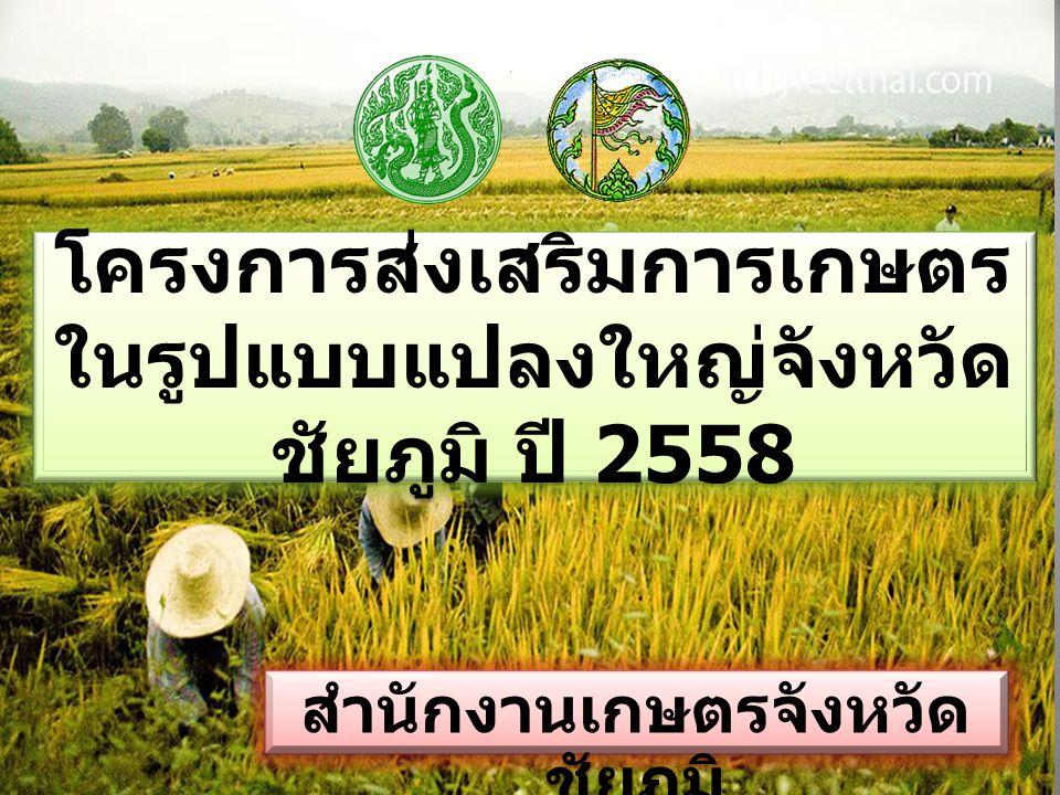 โครงการส่งเสริมการเกษตร ในรูปแบบแปลงใหญ่จังหวัด ชัยภูมิ ปี 2558 สำนักงานเกษตรจังหวัด ชัยภูมิ