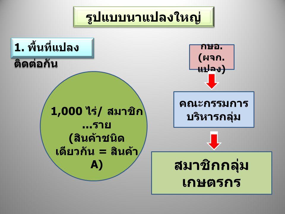 รูปแบบนาแปลงใหญ่ 1. พื้นที่แปลง ติดต่อกัน 1,000 ไร่ / สมาชิก... ราย ( สินค้าชนิด เดียวกัน = สินค้า A) กษอ. ( ผจก. แปลง ) คณะกรรมการ บริหารกลุ่ม สมาชิก