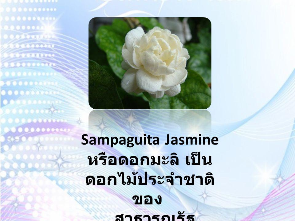 Padauk นั้นมีชื่อไทยว่า ประดู่ เป็นดอกไม้ประจำชาติของ สหภาพพม่า ในไทยนั้นดอกประดู่ได้ถูกนำมาเป็นสัญลักษณ์ของ กองทัพเรือ เราจะเรียกลูกทัพเรือว่าเป็นลูกประดู่ที่เรา คุ้นเคยกัน ต้นประดู่นั้นก็ยังเป็นสัญลักษณ์ของ จังหวัด ระยอง ด้วย รวมทั้งสถานศึกษาอีกหลายแห่งประดู่ เป็นไม้มงคล เชื่อ ว่าก่อให้เกิดความยิ่งใหญ่ สามัคคี เพราะประดู่นั้นต้นสูงใหญ่มากๆควรปลูกในทิศตะวันตก ของตัวบ้าน และปลูกในวันเสาร์ คนที่ปลูกจะต้องเป็นผู้ใหญ่ที่เคารพ นับถือ ถ้าเป็นผู้กระทำความดีอันยิ่งใหญ่ จะยิ่งช่วยเสริมเข้าไป อีก