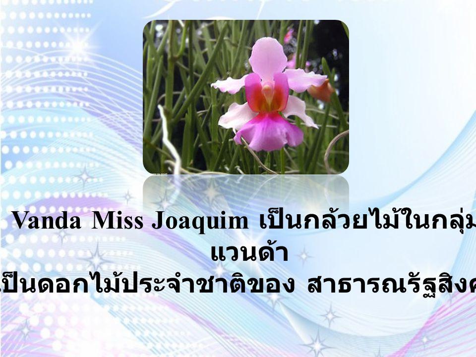 Sampaguita Jasmine หรือดอกมะลิ เป็น ดอกไม้ประจำชาติ ของ สาธารณรัฐ ฟิลิปปินส์