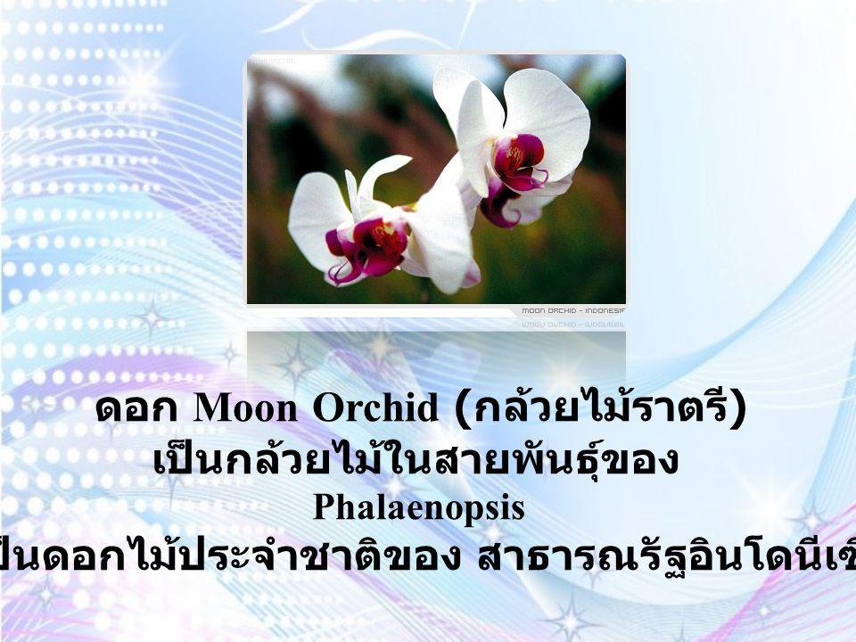 ดอก Rumdul ก็คือดอก ลำดวน เป็นดอกไม้ประจำ ชาติของ ราชอาณาจักรกัมพูชา ลำดวนเป็นไม้มงคลอีกชนิดหนึ่ง เพราะมีความหมายแฝงถึงความสดชื่นและกลมกลืน กลิ่นหอมเย็นมาก ลำดวนเป็นต้นไม้สำหรับสุภาพสตรี และควรปลูกในทิศตะวันตกเฉียงเหนือ ของตัวบ้าน ที่สำคัญต้องปลูกวันพุธด้วย