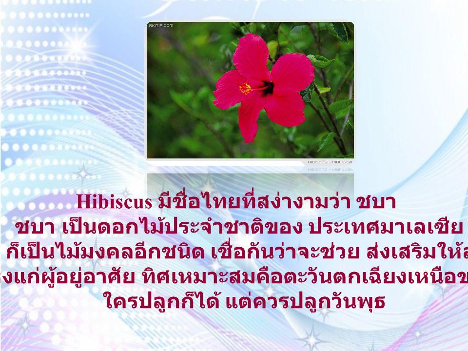 Dok Champa ดอกจำปา ลีลาวดี หรือชื่อเก่าคือ ลั่นทมนั่นเอ เป็น ดอกไม้ประจำชาติของ สาธารณรัฐ ประชาธิปไตยประชาชนลาว คนโบราณมี ความเชื่อว่า ต้นลั่นทมนั้นไม่ควรปลูกใน บ้าน ด้วยที่มีชื่อไปพ้องกับคำว่า ระทม ซึ่ง แปลว่า เศร้าโศก, ทุกข์ใจ จึงได้มีการ เรียกชื่อ เสียใหม่ให้เป็นมงคล ว่า ลีลาวดี ทั้งนี้ไม่ได้มีการ กำหนดเปลี่ยนชื่อแต่อย่าง ใด ซึ่งจริงๆ แล้วชื่อว่า ลั่นทม นั้นได้มา จากชื่อ นครธม สมัยที่ไทยไปตีได้เมืองนี้มา ที่นั่นปลูก ต้นไม้ชนิดนี้มาก จึงนำกลับมาปลูกที่ไทย