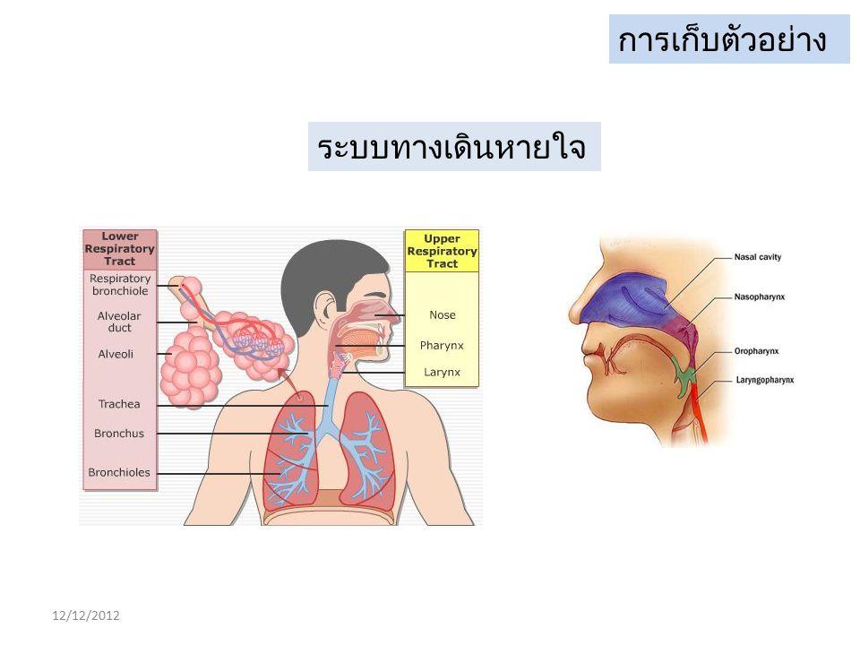 ชนิดตัวอย่าง อาการ / ระบบ ชนิดสิ่งส่งตรวจ คำแนะนำ เพิ่มเติม ทางเดินหายใจส่วนล่าง bronchoalveolar lavage, tracheal aspirate endotracheal aspirate, plurals fluid, sputum ให้ใส่ภาชนะปลอดเชื้อไม่ต้องใส่ VTM ยกเว้นกรณี ผู้ป่วยใส่ tube ให้ตัดสาย ET-tube จุ่มลงในหลอด VTM ควรเก็บตัวอย่างจาก ทางเดินหายใจส่วนบน ควบคู่ไปด้วย ( เพิ่มโอกาสการพบเชื้อ ) ทางเดินหายใจส่วนบน-nasopharyngeal aspirate, nasopharyngeal wash ให้ใส่ภาชนะปลอดเชื้อไม่ต้องใส่ VTM -เก็บnasopharyngeal swab และthroat swab จุ่มลง ในหลอด VTM(เพื่อเพิ่มปริมาณไวรัส) ใช้ rayon หรือ dracon swab ที่ไม่เคลือบ calcium arginate (ยับยั้ง ปฏิกิริยา PCR)