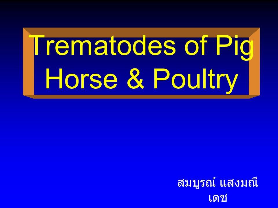 Trematode of Pig Genus Fasciolopsis Genus Echinostoma (Paryphostomum Genus Gastrodiscoides