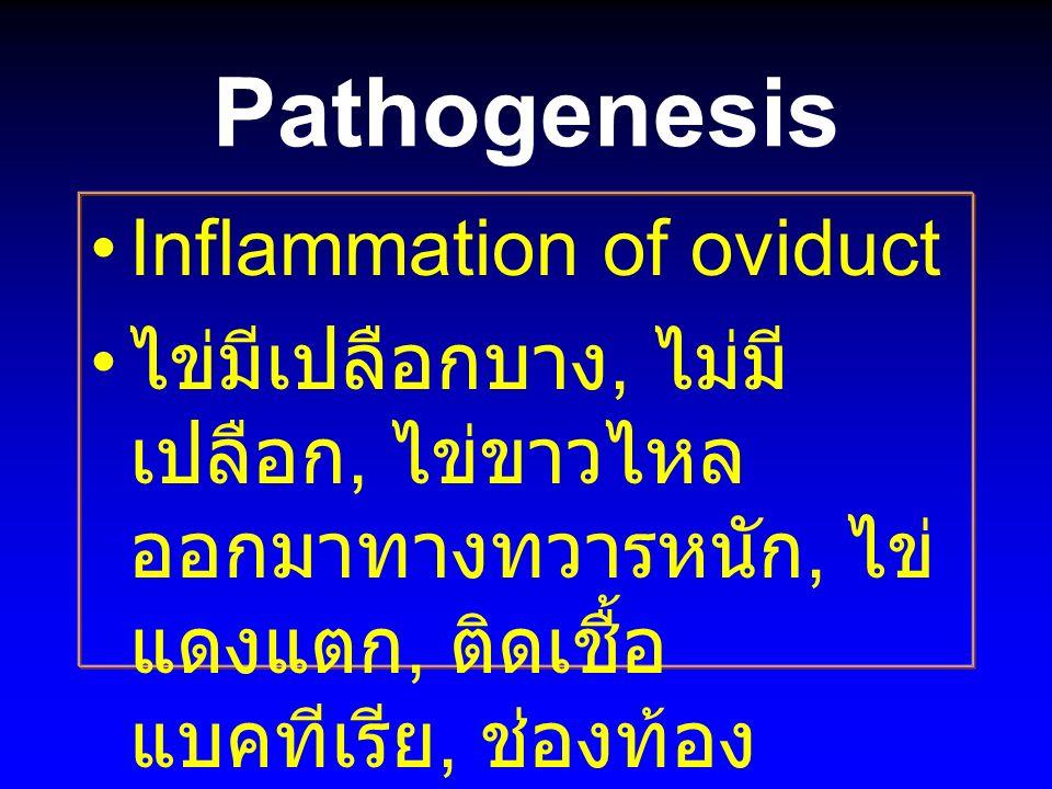 Pathogenesis Inflammation of oviduct ไข่มีเปลือกบาง, ไม่มี เปลือก, ไข่ขาวไหล ออกมาทางทวารหนัก, ไข่ แดงแตก, ติดเชื้อ แบคทีเรีย, ช่องท้อง อักเสบ, ตาย