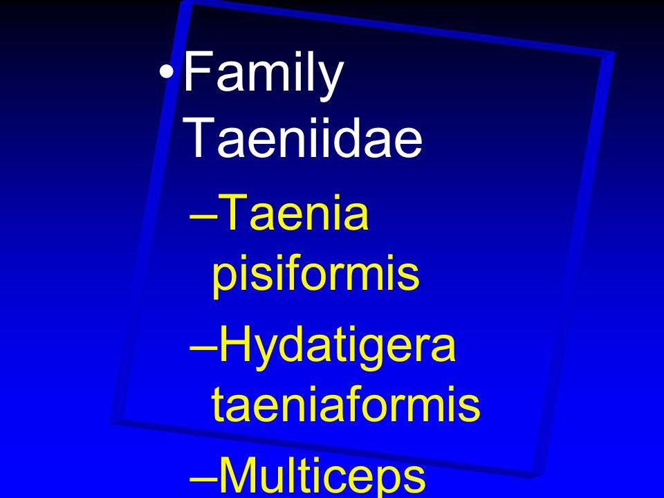 Family Taeniidae –Taenia pisiformis –Hydatigera taeniaformis –Multiceps multiceps –Echinococcus granulosus