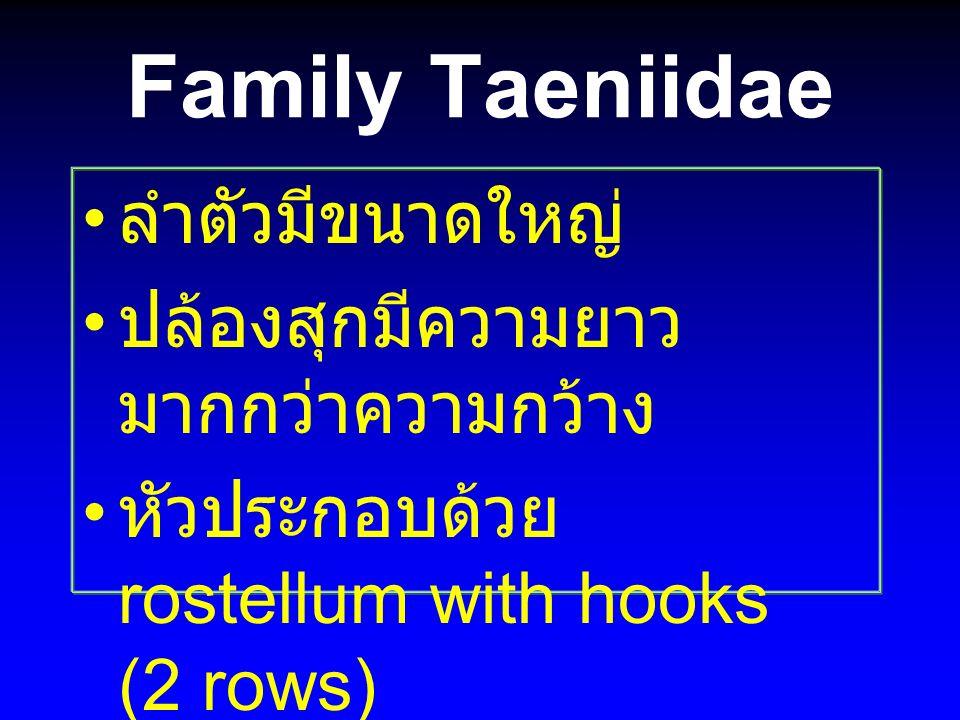Family Taeniidae ลำตัวมีขนาดใหญ่ ปล้องสุกมีความยาว มากกว่าความกว้าง หัวประกอบด้วย rostellum with hooks (2 rows)
