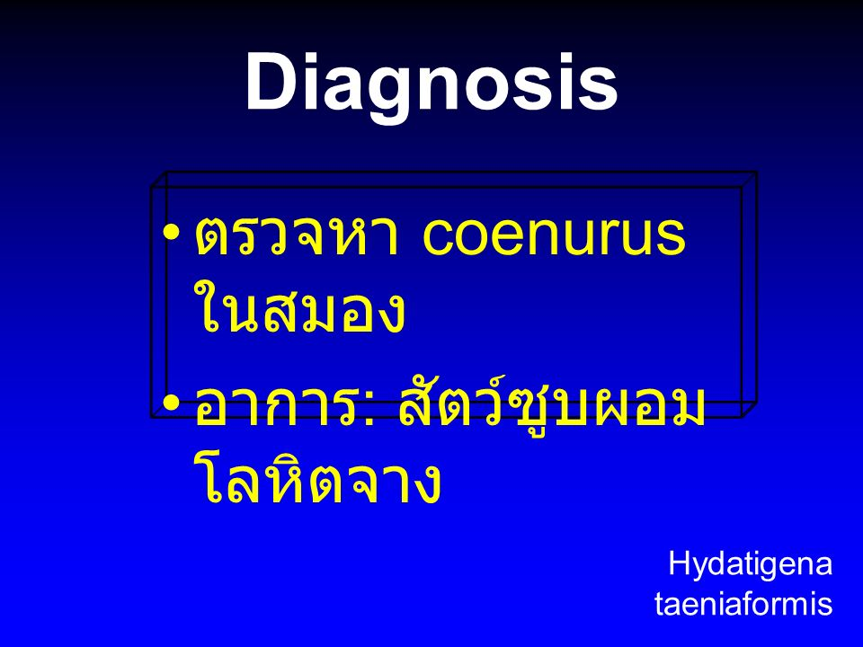 Diagnosis ตรวจหา coenurus ในสมอง อาการ : สัตว์ซูบผอม โลหิตจาง Hydatigena taeniaformis