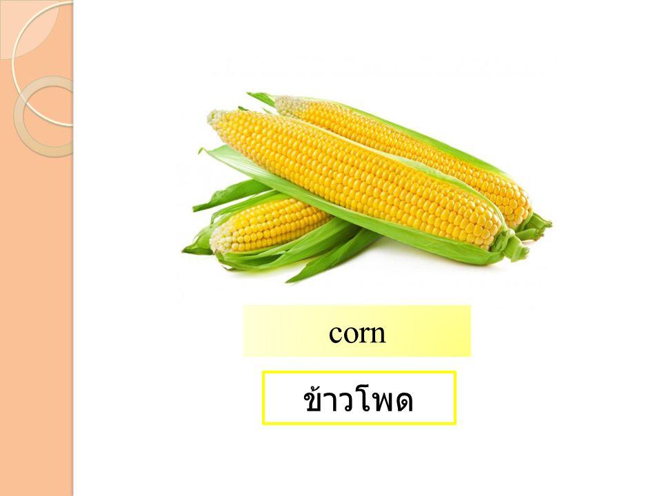 ข้าวโพด corn