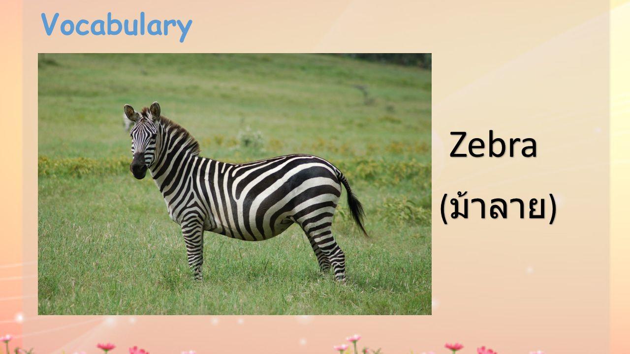 Vocabulary Zebra ( ม้าลาย )