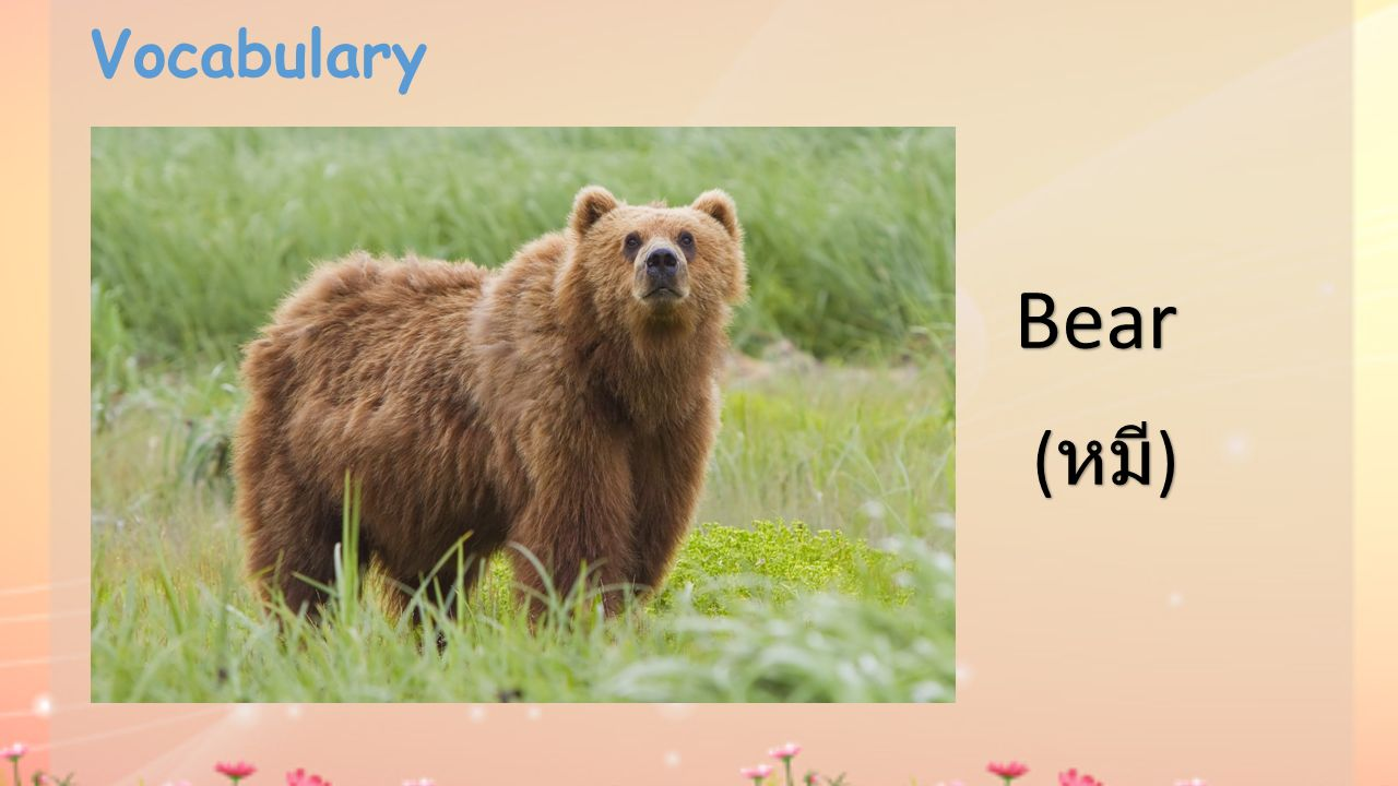 Vocabulary Bear ( หมี )