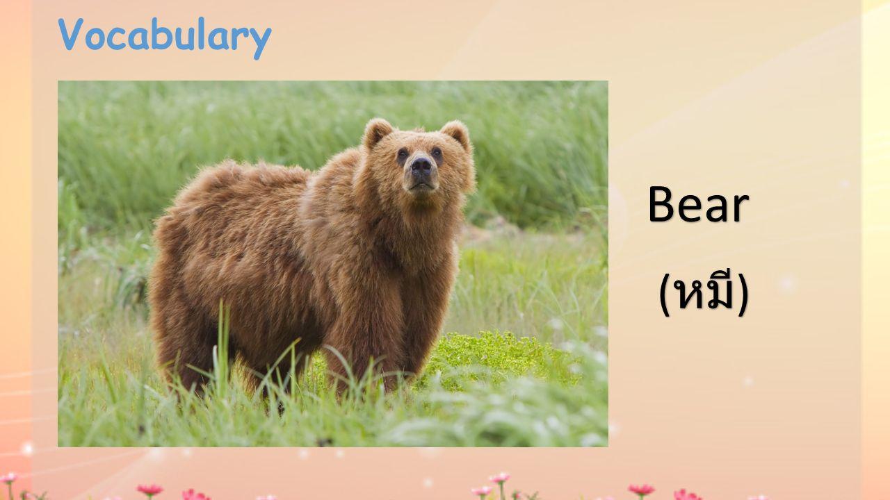 Vocabulary Bear ( หมี )
