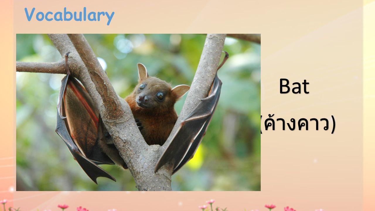 Vocabulary Bat ( ค้างคาว )