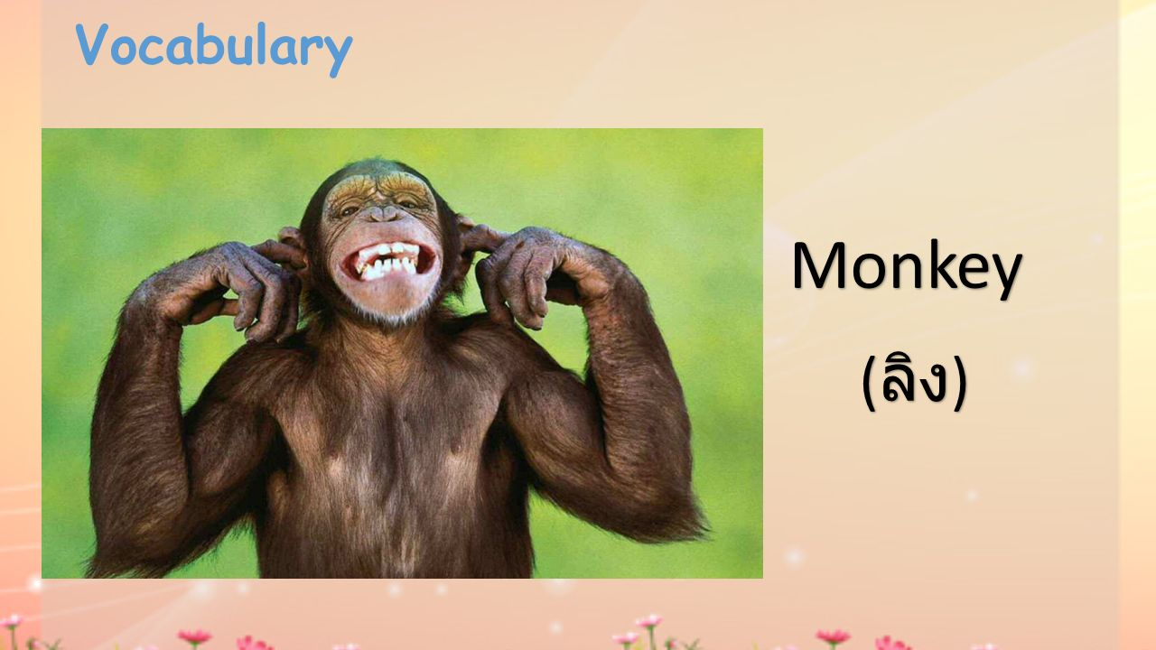 Vocabulary Monkey ( ลิง )