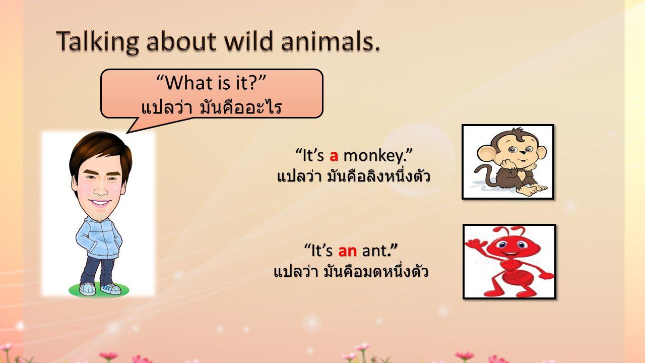 What is it? แปลว่า มันคืออะไร It's a monkey. แปลว่า มันคือลิงหนึ่งตัว It's an ant. แปลว่า มันคือมดหนึ่งตัว