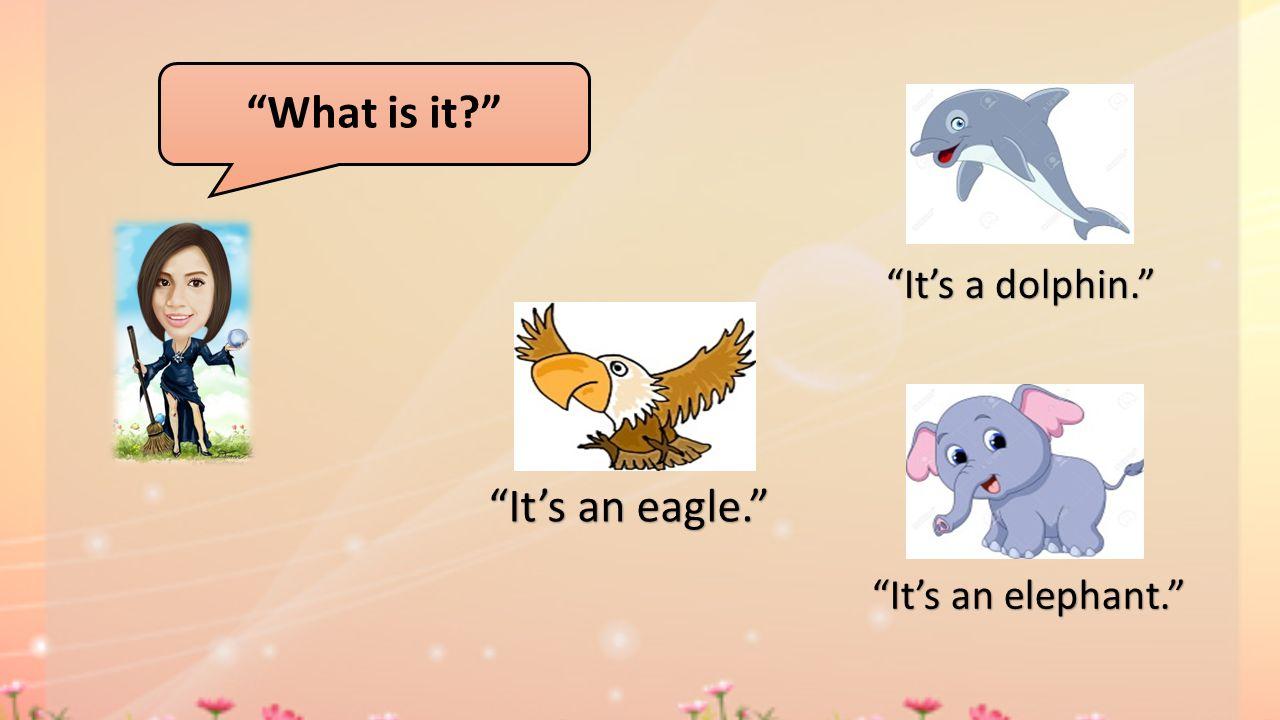 What is it? It's a dolphin. It's an elephant. It's an eagle.