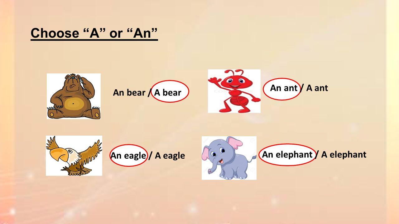 Choose A or An An bear / A bear An eagle / A eagle An elephant / A elephant An ant / A ant