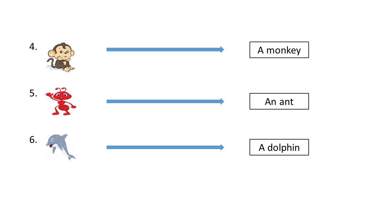 4. 5. 6. A monkey An ant A dolphin