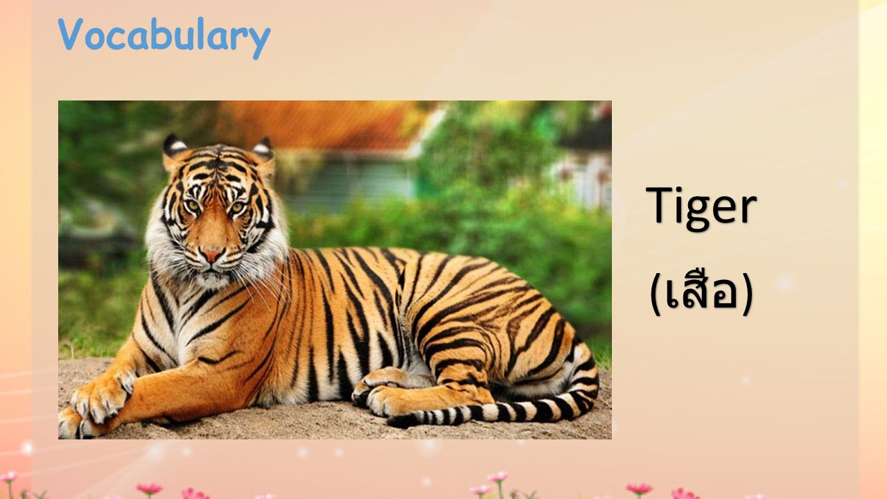 Vocabulary Tiger ( เสือ )