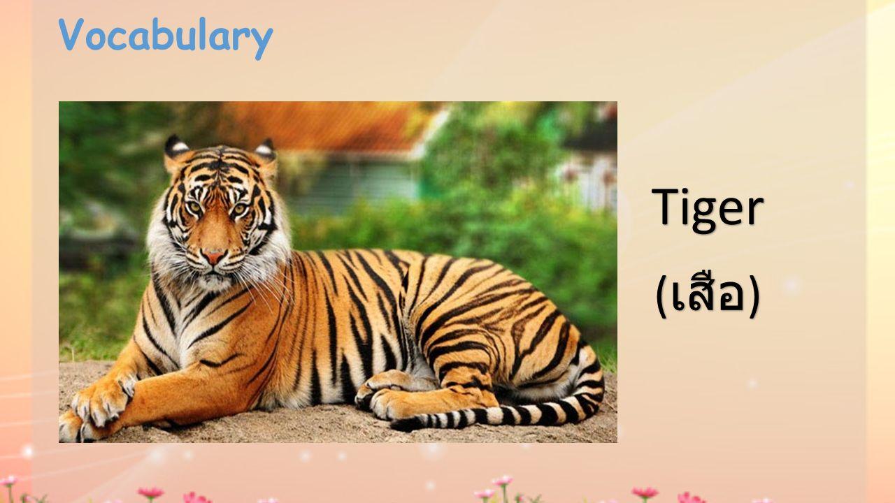 Vocabulary Tiger ( เสือ )
