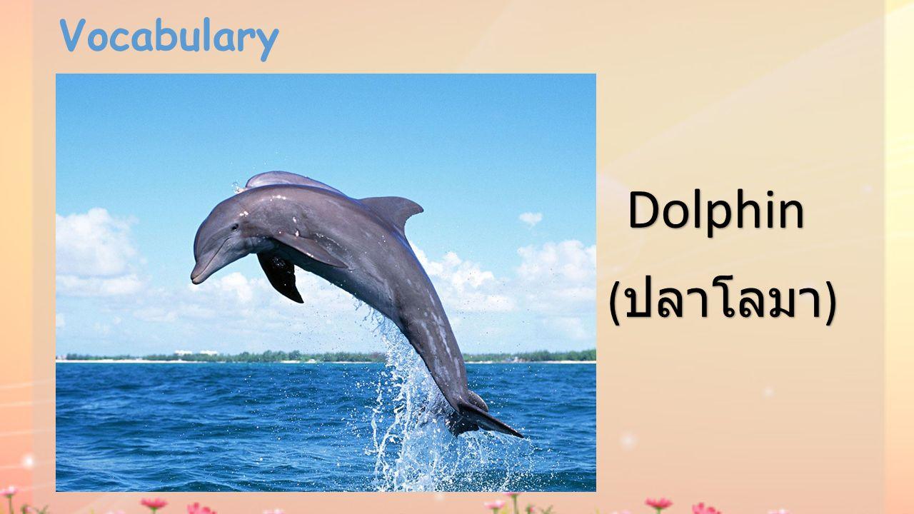 Vocabulary Dolphin ( ปลาโลมา )